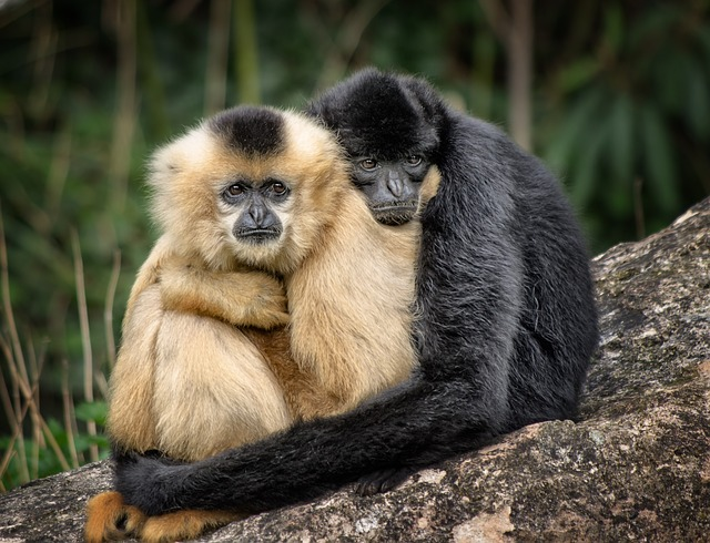 Monkeys - Lessons in Trust, Vulnerability, and How to Be a Good Friend